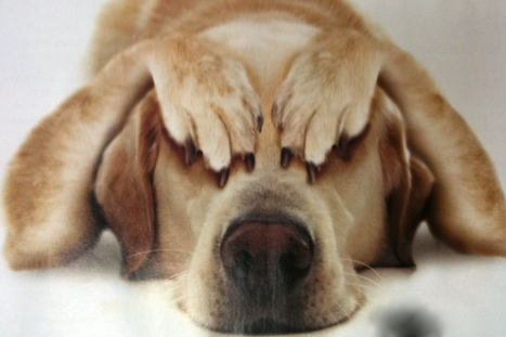 Brain Scans Reveal Dogs' Thoughts | Weird Science | Scoop.it