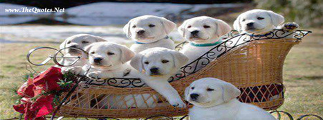 Facebook Cover Image - Group of Cute Dogs - TheQuotes.Net | Dogs | Scoop.it