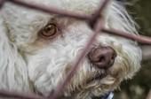 J'ai trouvé un animal abandonné - Blog de zoomalia.com | PETS & ANIMAUX | Scoop.it