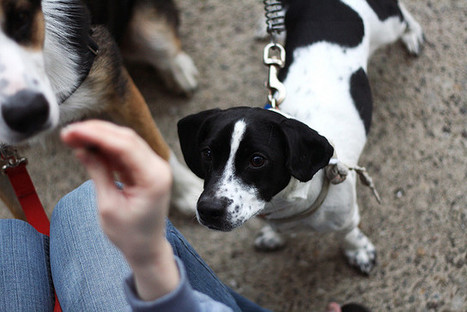 How Canine Body Language Can Help Us Understand Our Pets' Behavior—and Our  Own | Health on GOOD | Silicon Valley Dogs | Scoop.it
