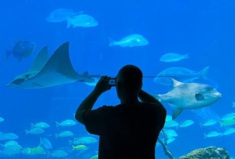 Escritores independientes, ¿dentro o fuera del acuario? | Ecos recientes del mundo del libro | Scoop.it