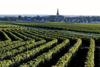 Marché du vrac : L'AOC Saint-Nicolas-de-Bourgueil en hausse - Actualités - La Vigne, le magazine du monde viticole, de la viticulture et du vin | Viticulture | Scoop.it