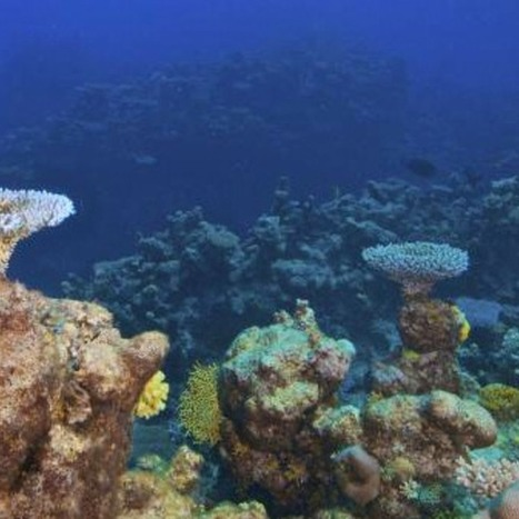 Google Street View Conquers the Oceans [VIDEO] | Encounters with the ocean | Scoop.it