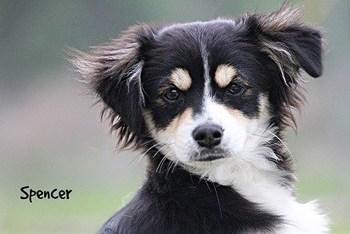 Considering adopting a pet for Easter? Animal shelters offer gre - KLTV.com ... - KLTV | Animal Rescue & Shelter Life | Scoop.it