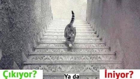 Bu Kedi iniyor mu? Çıkıyor mu? | Eğlence | www.eneger.com | Scoop.it