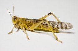 How Insects' Wings Help Engineers… | Biomimicry | Scoop.it