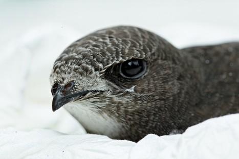 Quels sont les oiseaux de nos campagnes à protéger ? | Biodiversité | Scoop.it