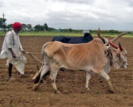 Delays in settling crop insurance claims hurting farmers: IRDA - Hindu Business Line | Construction Claims | Scoop.it
