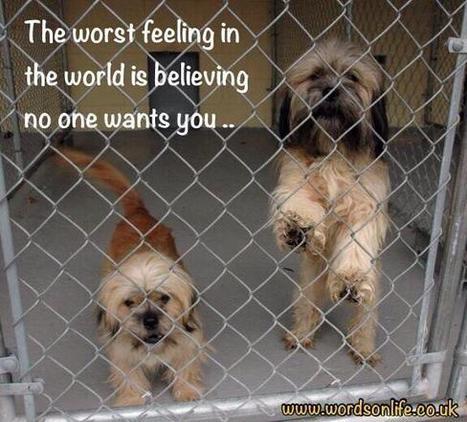 Tweet from @LCAnimalRescue | dog lovers | Scoop.it