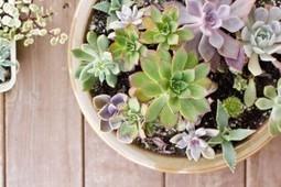 Succulent Care - Succulents and Sunshine | Garden Grunt | Scoop.it