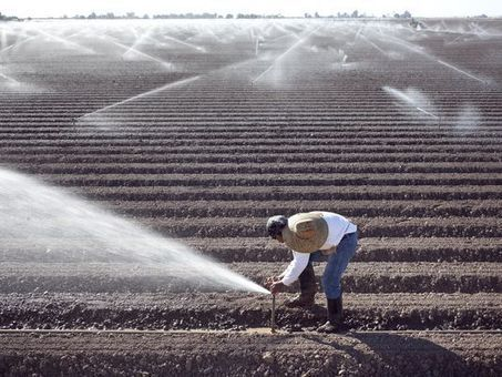 Arizona agriculture: An often ignored success story | Arizona Republic | CALS in the News | Scoop.it