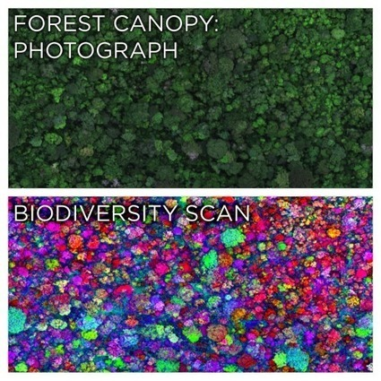 Rainforest Canopy Species in Technicolor! | Rainforest EXPLORER:  News & Notes | Scoop.it