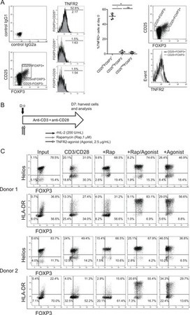 A TNFR2-Agonist Facilitates High Purity Expansion of Human Low Purity Treg Cells | Immunology and Biotherapies | Scoop.it