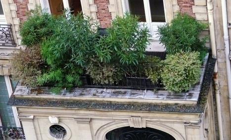 Végétaliser un petit espace vert | Jardins urbains | Scoop.it