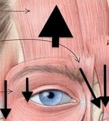 ¿Por qué tiene mala fama el Botox? | healthy | Scoop.it