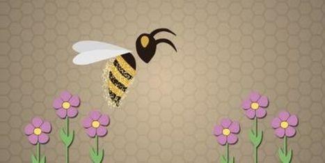 Le déclin des abeilles expliqué en trois minutes   Le cri de la courgette... Cuisine biologique   Scoop.it