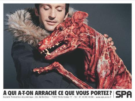 Mon Blog: La Publicité Choquante | Publicités choc par Aude Crémonèse | Scoop.it