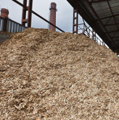 Wood fiber costs for hardwood pulp producers have fallen 17% in two  years | Timberland Investment | Scoop.it