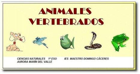 Animales vertebrados | Biología. Biology. Education. TIC | Scoop.it
