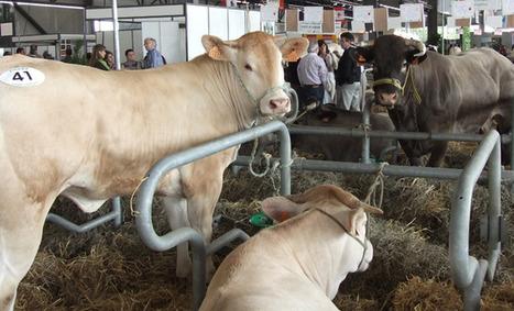 Salon régional de l'agriculture 2013 : de l'Aquitaine au monde | BIENVENUE EN AQUITAINE | Scoop.it