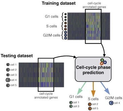 Computational assignment of cell-cycle stage from single-cell transcriptome data | Viral Modeling and Simulation | Scoop.it