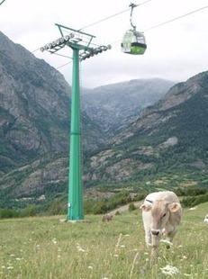 Aramón colabora en el estudio para la utilización de los pastos en la estación de esquí de Panticosa | Actualidad forestal cerca de ti | Scoop.it