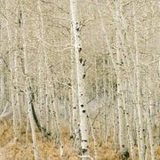 List of Biotic and Abiotic Factors in a Forest Ecosystem | Ecosystems - Grade 7 | Scoop.it