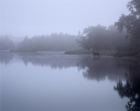 Pictures of Maine beauty on exhibit at Harvard Square - Press Herald | photography | Scoop.it