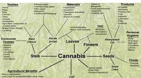 Amotivational Syndrome of Marijuana Explained?   Neuroscienze   Scoop.it