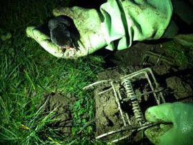 Mollenklemmen risico voor de loslopende hond | RTV Rijnmond | cazanshondencentrum | Scoop.it