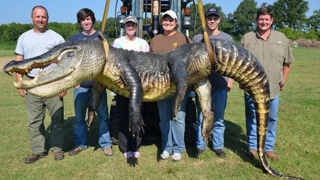 Giant alligator caught by Mississippi man - World - CBC News | All about water, the oceans, environmental issues | Scoop.it