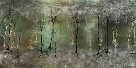 Greg Dunn Design | Visual Art | Neuroscience Art | Gold Leaf Painting | Claire Sistach | Scoop.it