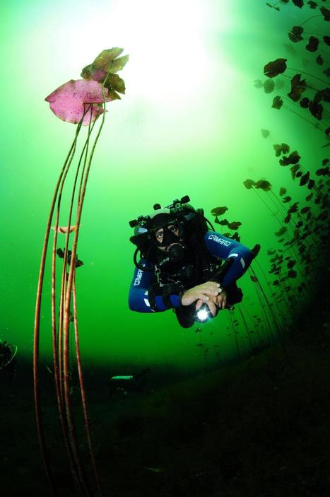 Scuba Diving in Mexico with CENOTEXPERIENCE Cave diving- Divers' Reviews | scubadiving | Scoop.it