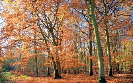 Woodland walks on the wane 'due to lack of time and interest' | GarryRogers NatCon News | Scoop.it