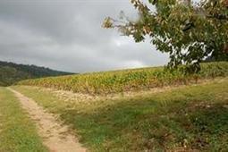 Réforme Ocm vin - Les vins « Aovdqs » ne sont plus - Agrisalon | Droit de la vigne et du vin | Scoop.it