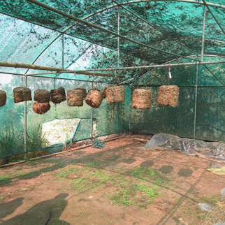 Mushroom Cultivation & Post preservation practical Training in OUAT,… | Facilitater, Sustainable Development | Scoop.it