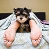 sleep serves many functions on the brain