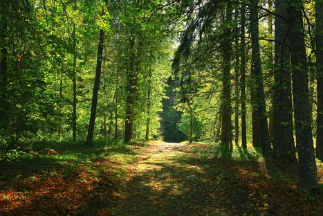 L'investissement des particuliers dans le forestier, le nouveau fer de lance de Wiseed | Financement énergétique | Scoop.it