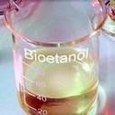 Quieren que los autos usen más biocombustible para contener la salida de dólares | oilseed | Scoop.it