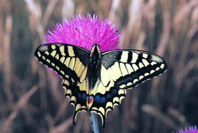 Parc national du Mercantour : une faune sauvage abondante | EntomoNews | Scoop.it