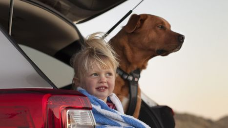 Column: Here are the best current cars for dogs - USA TODAY | QwikWash America! Car Care Tips | Scoop.it