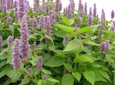 18 of Nature's Most Powerful Medicinal Plants | Plantsheal | Scoop.it