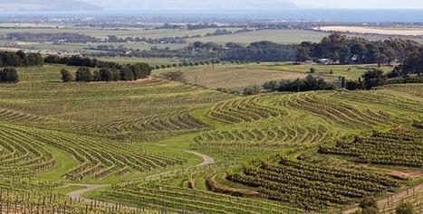 McLaren Vale,  une région viticole australienne remarquable | Oenologie - Vins - Bières | Scoop.it