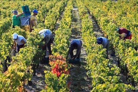 France 2014: the unpredictable vintage   Vitabella Wine Daily Gossip   Scoop.it