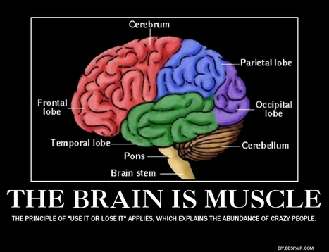 Your brain is a muscle « Oddly Said | Sleep | Scoop.it