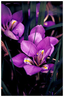The Best Plants For Winter | Gardener's Life | Scoop.it
