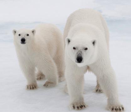 Save the Arctic | Meio ambiente | Scoop.it