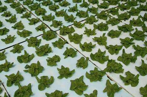 Growing Produce In A Floating System | Greenhouse Grower Magazine | CALS in the News | Scoop.it