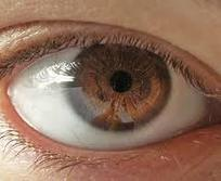 How do the eyes interact with other parts of the body? | Health | Scoop.it