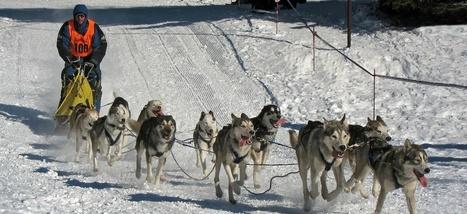 En Alaska, il faut importer de la neige pour les courses de chiens de traîneau | TRANSITURUM | Scoop.it